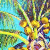 Electric Coconuts I